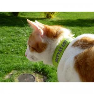 Obojek se jménem a tel. číslem 1,2 cm pro kočky